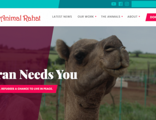 Custom WordPress Theme – Animal Rahat